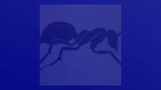 KIRSTY INGRAMS BIRTHDAY (JUMPER ANTS) 05.06.19