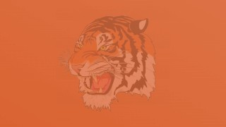 Theale Tigers joins Pitchero!