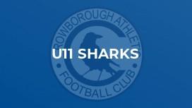 U11 Sharks