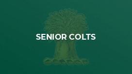 Senior Colts