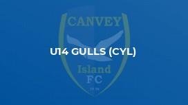 U14 Gulls (CYL)