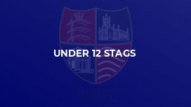 Under 12 Stags