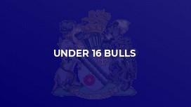 Under 16 Bulls