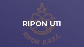 Ripon u11