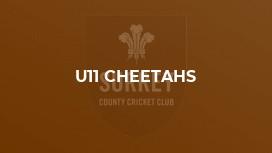 U11 Cheetahs