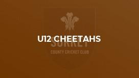 U12 Cheetahs