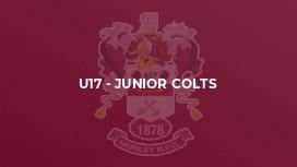 U17 - Junior Colts