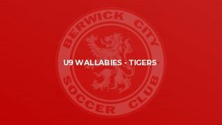 U9 Wallabies - Tigers