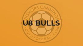 U8 Bulls