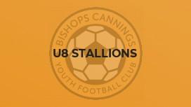 U8 Stallions