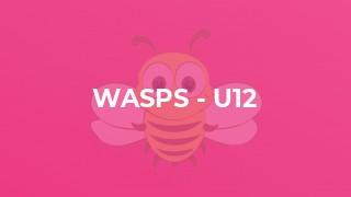 Wasps - U12